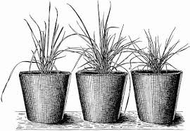 Seedlings Playreadings